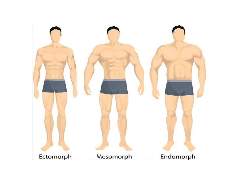 Körpertyp Diäten